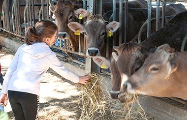 La nostra fattoria - Fattoria Giambrone - Cammarata - Agrigento - Sicilia