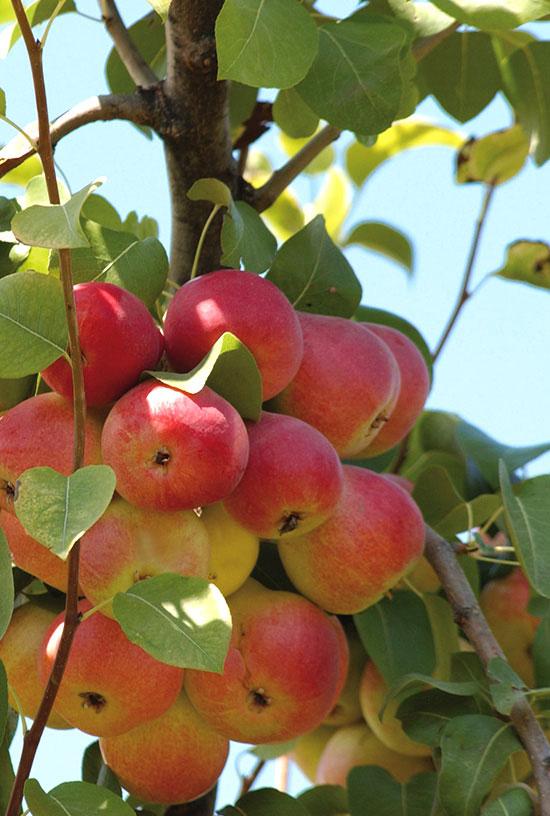 Il Frutteto - Fattoria Giambrone - Cammarata - Agrigento - Sicilia